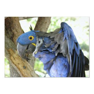 Invitación azul del Macaw Invitación 12,7 X 17,8 Cm