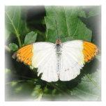 Invitación blanca inclinada naranja de la mariposa