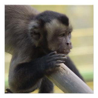 Invitación copetuda del mono del capuchón