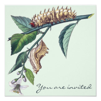Invitación de Caterpillar Invitación 13,3 Cm X 13,3cm