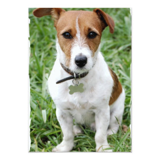 Invitación de Jack Russell Terrier