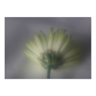 Invitación de la flor del crisantemo