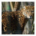 Invitación de la foto de Jaguar