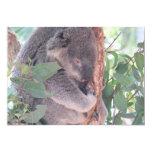 Invitación de la foto de la koala