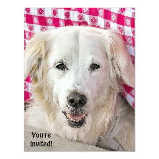 Invitación de la fritada del perrito caliente