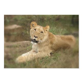 Invitación de la leona invitación 12,7 x 17,8 cm