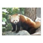 Invitación de la panda roja