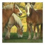 Invitación de los caballos de proyecto del