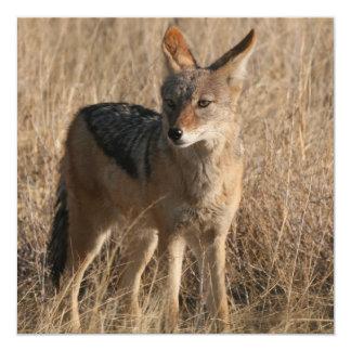 Invitación de los coyotes del bebé