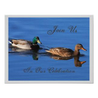 Invitación de los pares del pato silvestre