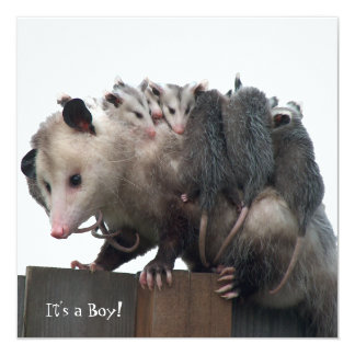 Invitación de mamá Possum Humorous Birth Photo