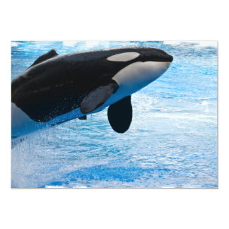 Invitación de salto de la ballena