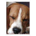 Invitación del beagle el dormitar