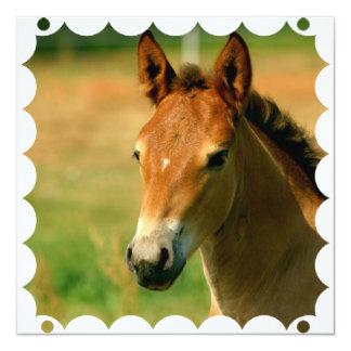 Invitación del caballo de la potra