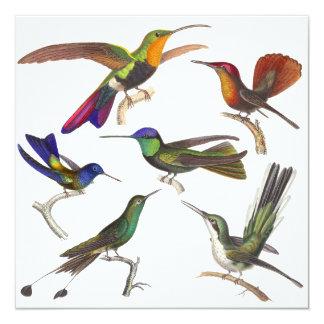 Invitación del colibrí - 6 colibríes hermosos