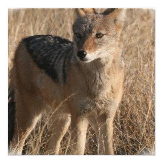 Invitación del coyote de Navajo