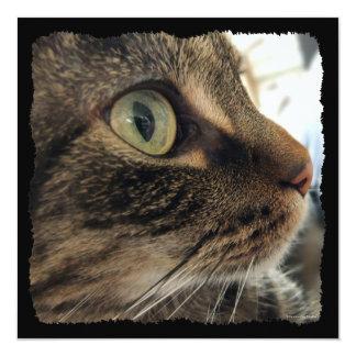 Invitación del cuadrado de la foto del gato del