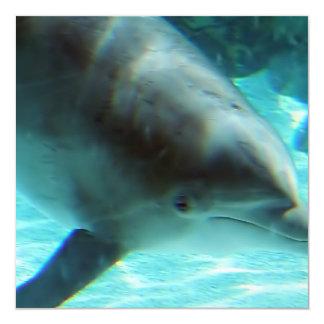 Invitación del delfín común invitación 13,3 cm x 13,3cm
