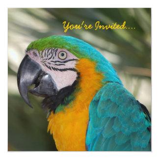 Invitación del fiesta del loro invitación 13,3 cm x 13,3cm