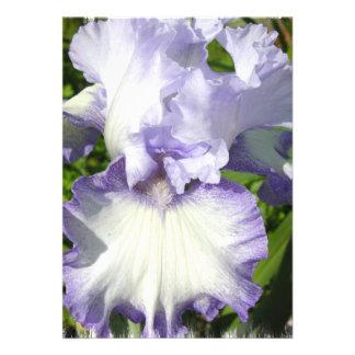 Invitación del iris barbudo