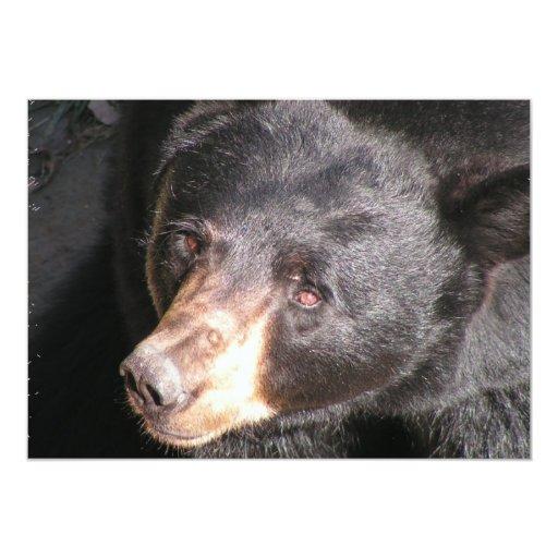 Invitación del oso negro