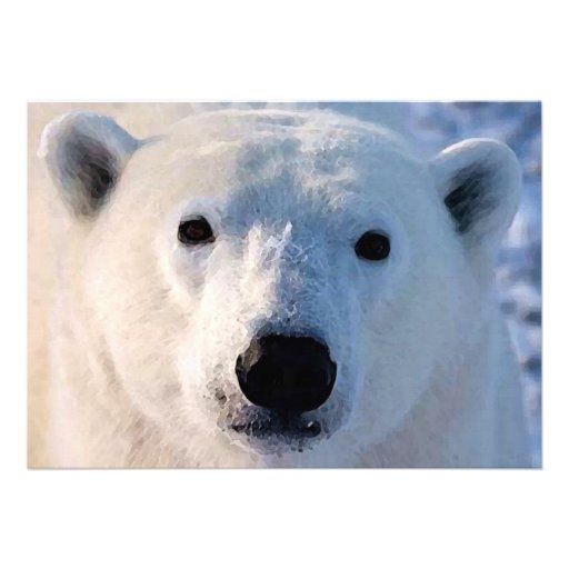 Invitación del oso polar