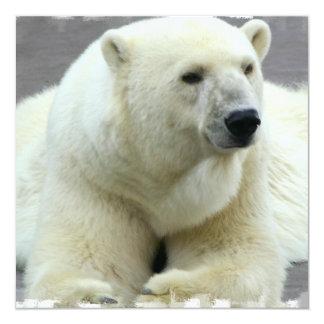 Invitación del oso polar invitación 13,3 cm x 13,3cm