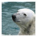 Invitación del perfil del oso polar