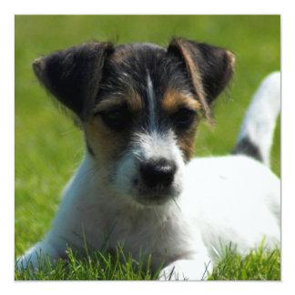 Invitación del perrito de Jack Russell Terrier