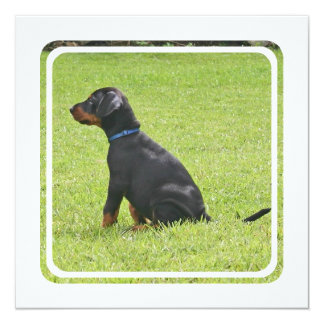 Invitación del perrito del Pinscher del Doberman