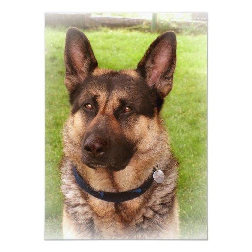 Invitación del perro de pastor invitación 12,7 x 17,8 cm