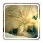 Invitación del perro de Pekingese