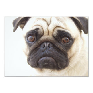 Invitación del perro del barro amasado