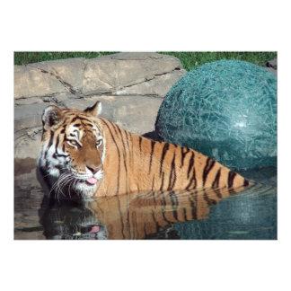 Invitación del personalizable del tigre de Bengala