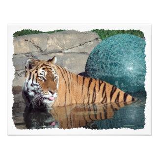 Invitación estilizada adaptable del tigre de Benga