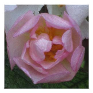Invitación - fiesta Cumpleaños - La Rosa Rosa