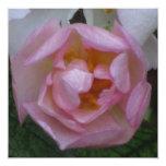 Invitación - fiesta Cumpleaños - La Rosa Rosa Invitación 13,3 Cm X 13,3cm