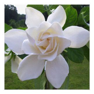 Invitación - Gardenia naturalmente magnífico