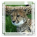 Invitación manchada del guepardo