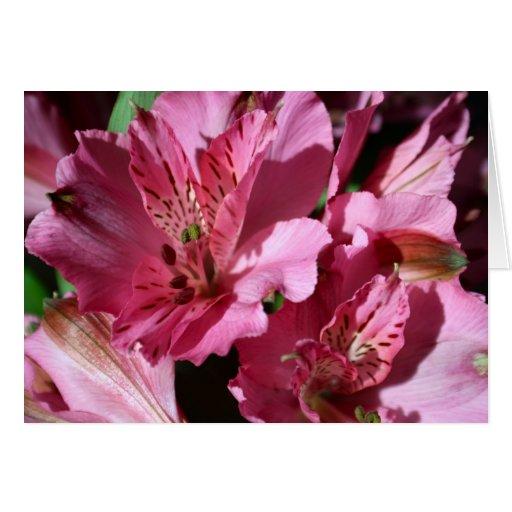 Invitación rosada de la flor del Alstroemeria Tarjeta De Felicitación