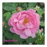Invitación rosada del fiesta del rosa invitación 13,3 cm x 13,3cm