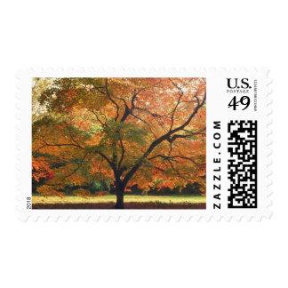 Invitación rústica del boda de la caída del boda timbres postales