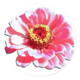 Invitación - Zinnia rosado Invitación 13,3 Cm X 13,3cm