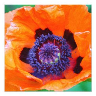 Invitaciones anaranjadas de la flor de la amapola comunicado personalizado