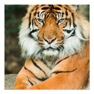 Invitaciones anaranjadas del tigre invitacion personal