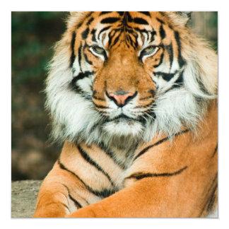Invitaciones anaranjadas del tigre invitación 13,3 cm x 13,3cm