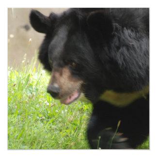 """Invitaciones asiáticas del oso negro invitación 5.25"""" x 5.25"""""""
