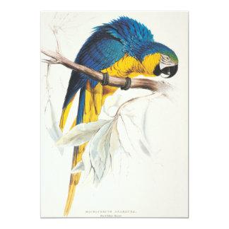"""Invitaciones azules y amarillas del Macaw Invitación 5"""" X 7"""""""