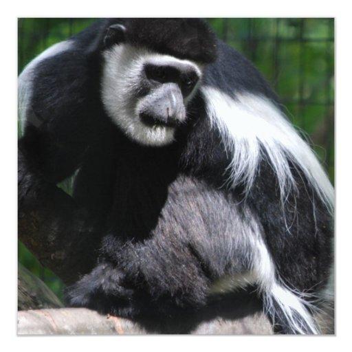 Invitaciones blancos y negros del mono invitación 13,3 cm x 13,3cm