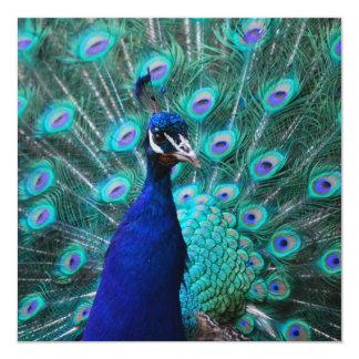Invitaciones bonitas del pavo real invitaciones personalizada